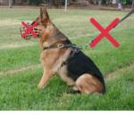 собака без поводка и намордника