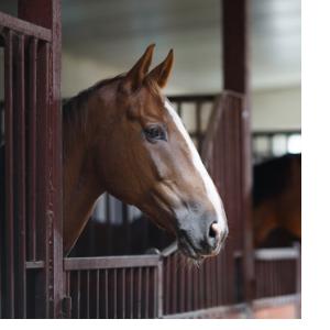 оказание ветеринарной помощи без договора