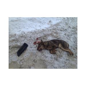 убийство собаки на собачий жир