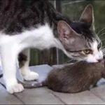 кошки в подвалах, кошки и крысы
