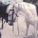 Ущерб, причиненный лошадью, взыскан с собственника