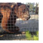 уголовная ответственность владельцев животных