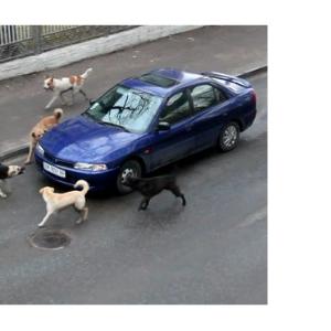 ущерб бездомная собака ДТП