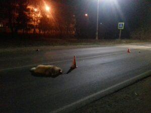 наезд на собаку как дорожно-транспортное происшествие