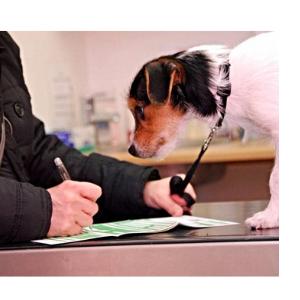 оплата ветеринарных услуг