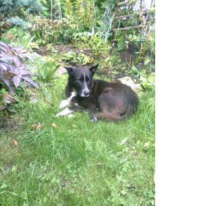 укусила собака в садоводстве