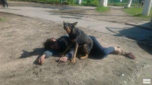 собака, крайняя необходимость