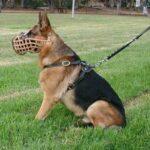 собака на поводке и наморднике