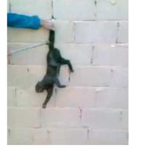 сожгла кошку ответственность