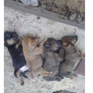 убитые щенки