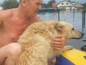 Наводнение. Собака вернулась домой.