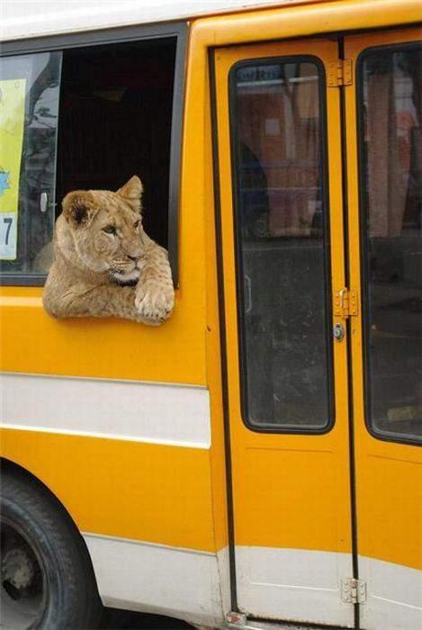 Перевозка животных городским автобусом