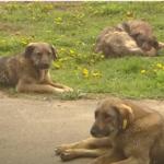 отлов собак с бирками