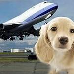 Вывоз домашних животных за границу