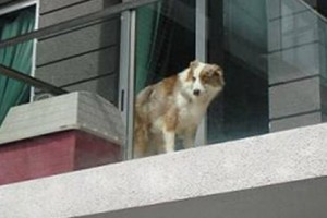 штраф за содержание собаки на балконе
